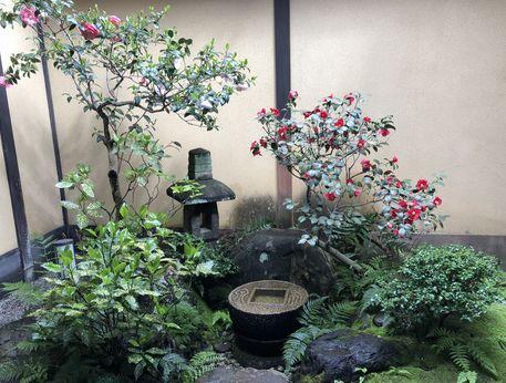 花洛庵のお庭