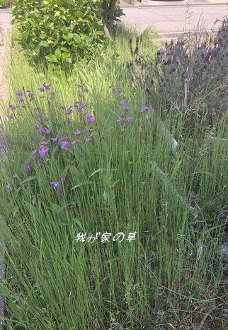 我が家の草刈りの日